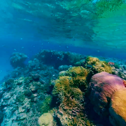 Great Barrier Reef copy
